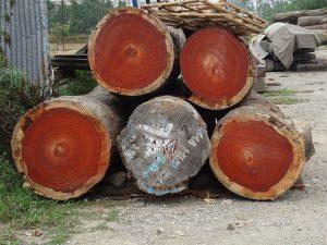 comprar-en-china-madera-huanghuali
