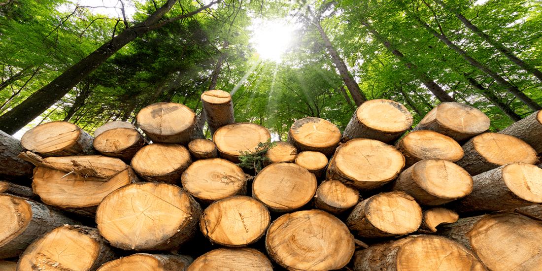 Comprar en China madera